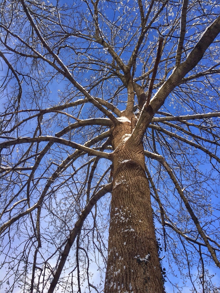 Low-Angle View Of Tree In Winter