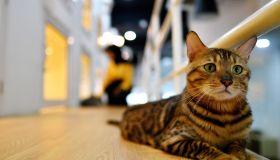 MALAYSIA-ANIMAL-CAT-DAY