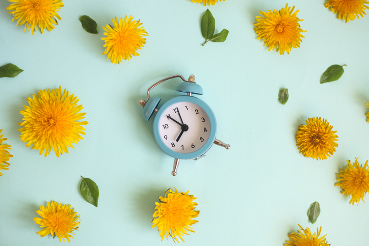 Retro alarm clock. Floral picture. Yellow flowers over pastel blue background. Spring vibrant flowers dandelions.